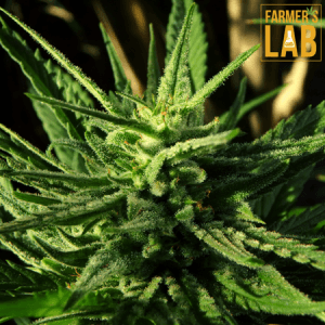 Weed Seeds Shipped Directly to Roeland Park, KS. Farmers Lab Seeds is your #1 supplier to growing weed in Roeland Park, Kansas.
