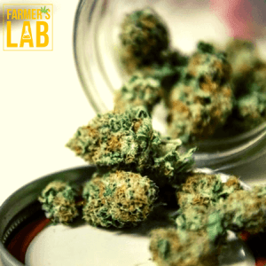 Weed Seeds Shipped Directly to Salt Lake City, UT. Farmers Lab Seeds is your #1 supplier to growing weed in Salt Lake City, Utah.