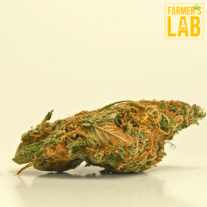 Weed Seeds Shipped Directly to Your Door. Farmers Lab Seeds is your #1 supplier to growing weed in South Dakota.
